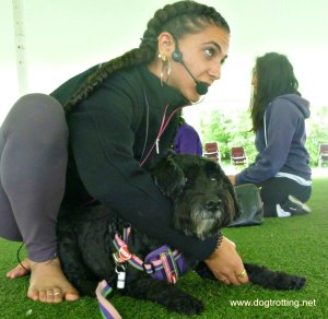 instructor and dog during dog yoga class Veg Food Fest Toronto dogtrotting.net