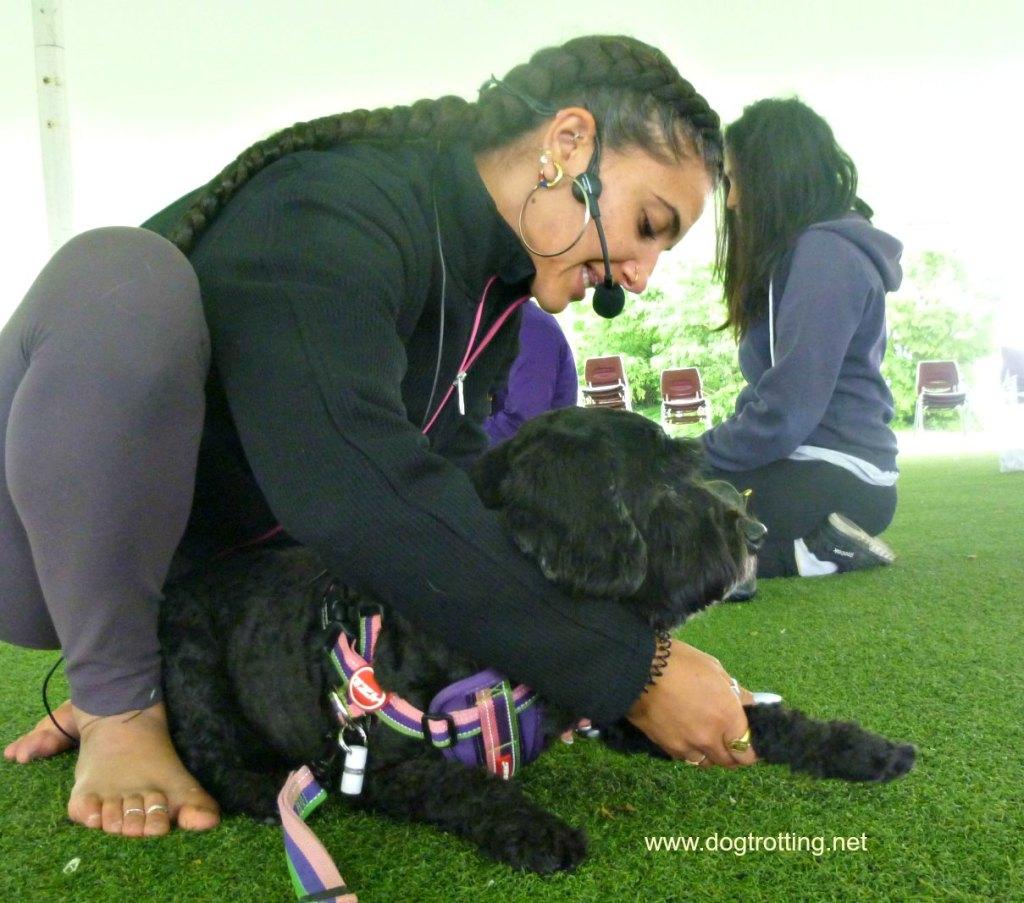 instructor and dog during dog yoga class Veg Food Fest Toronto dogtrotting.net