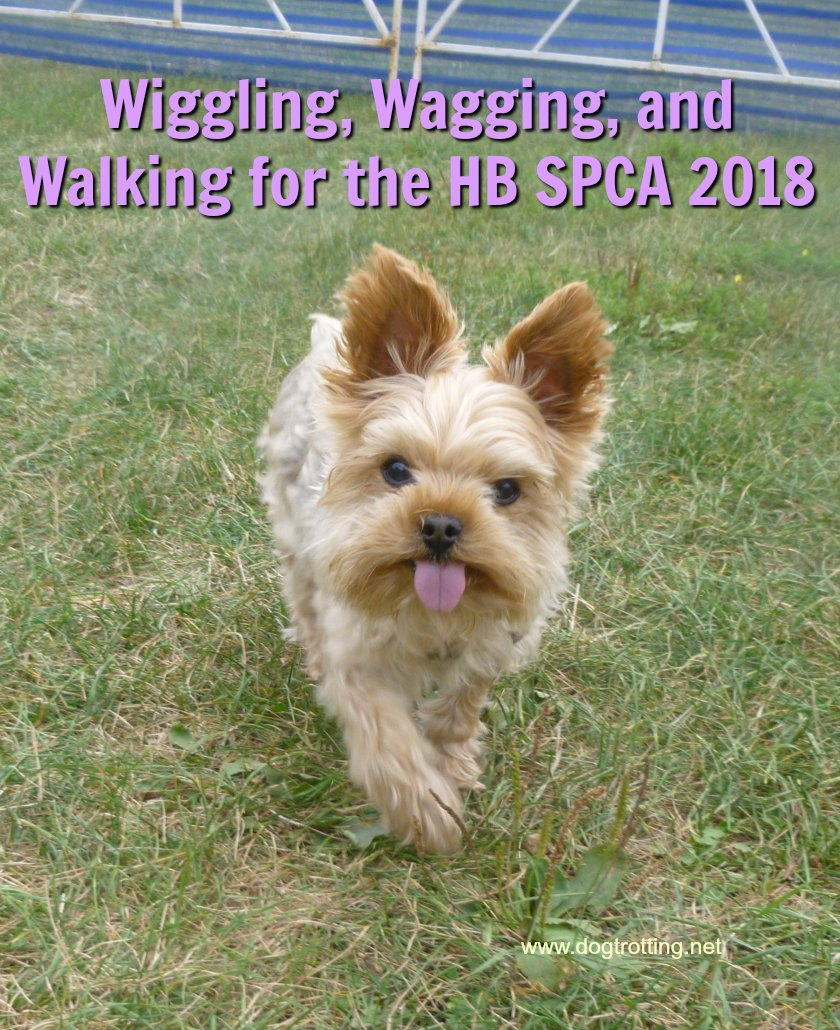 Wiggle Waggle Walk 2018 Results Are In!