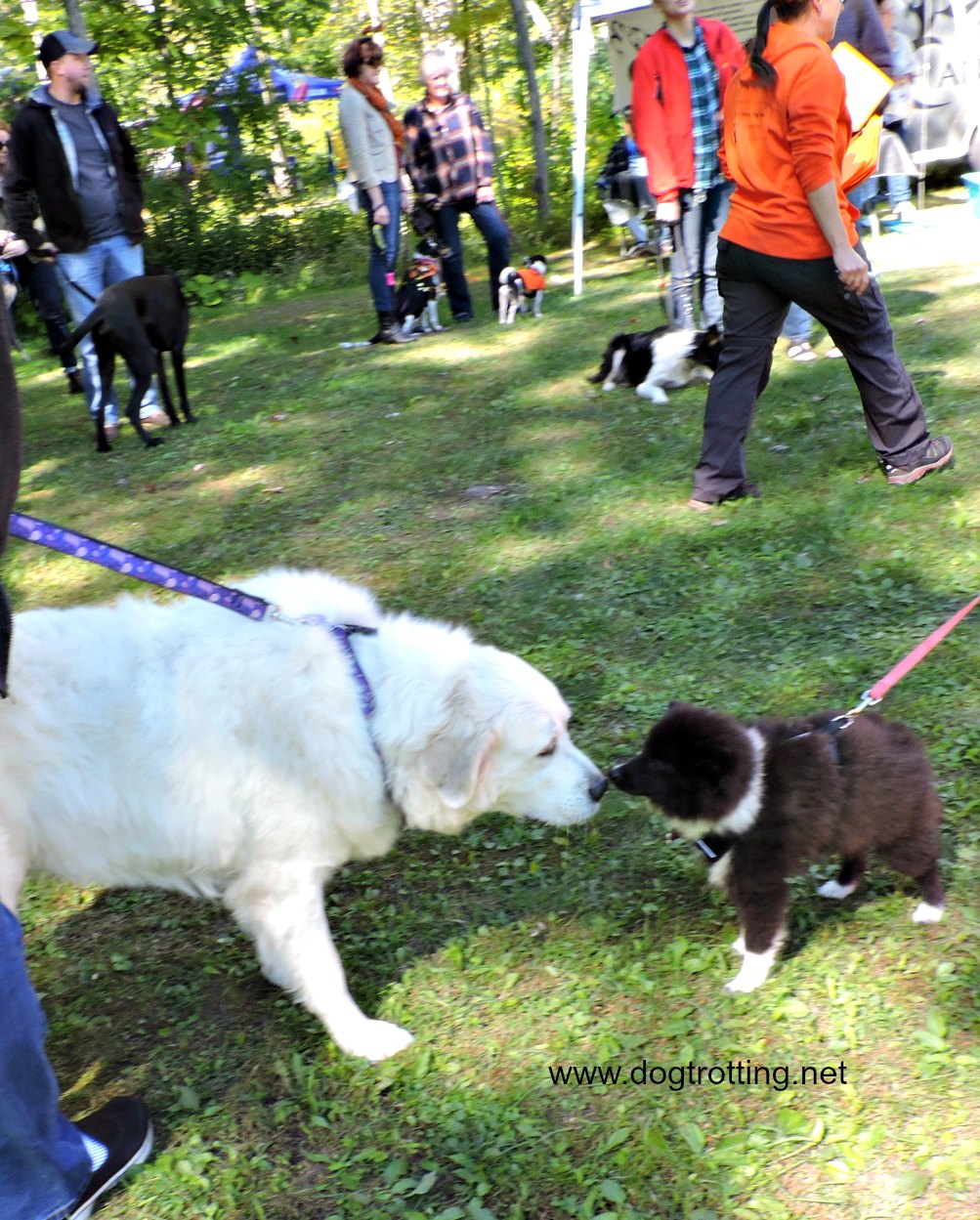dog at dogtorber fest outdoor dog event at solitude nature reserve