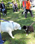 dog at dogtorber fest outdoor dog event at solitude nature reserve