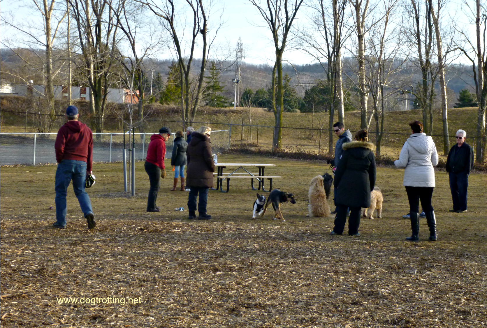 people and dogs at dog park dogtrotting.net