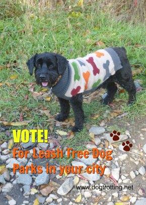 dog at dog park dogtrotting.net