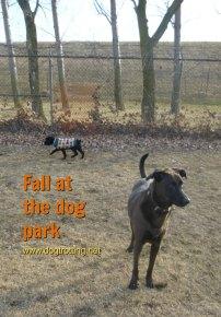 dogs at dog park dogtrotting.net