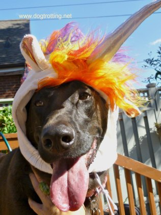 sasha unicorn costume 3