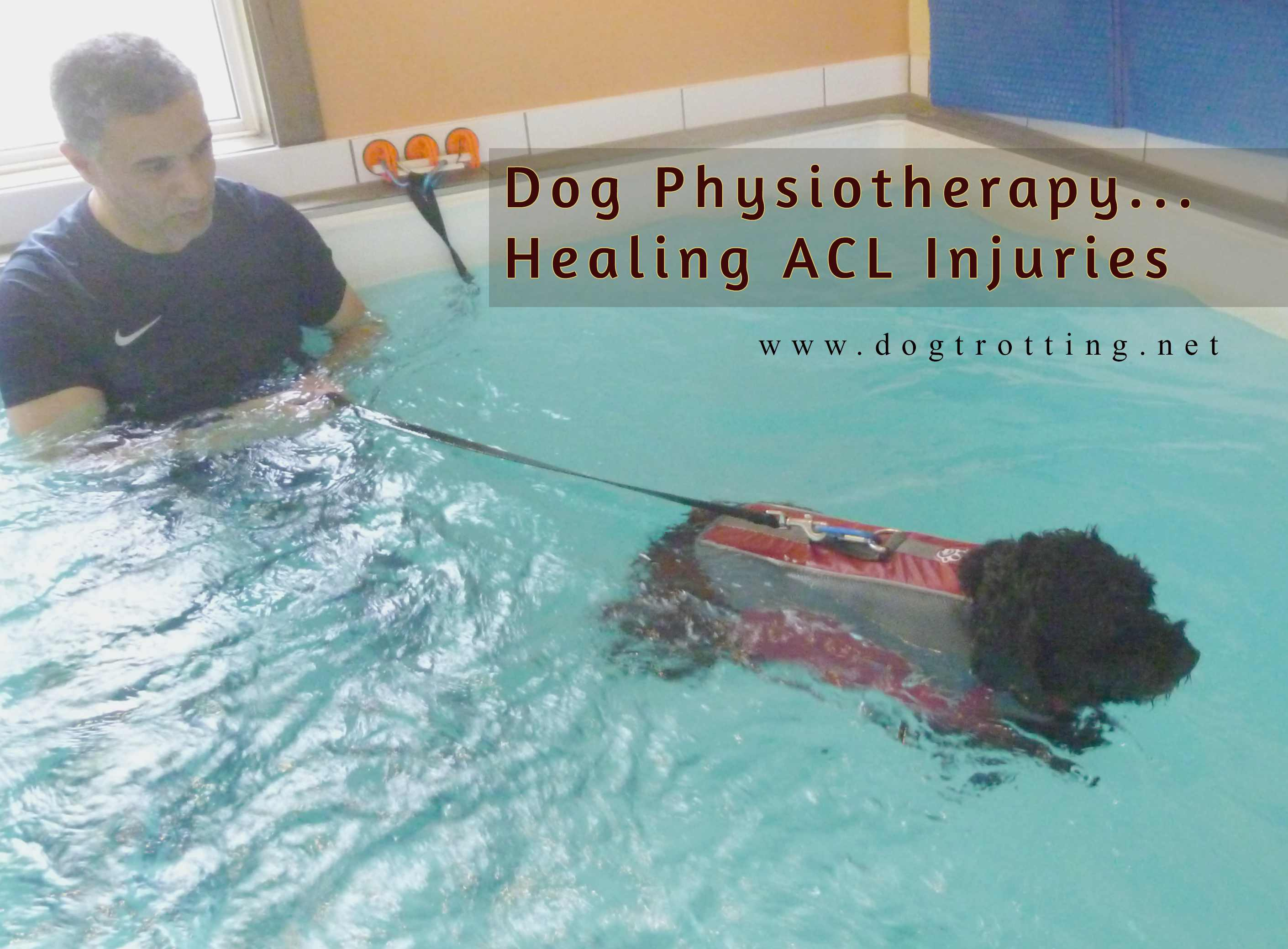 Solutions for Aging Dog Mobility Issues Part #3: Canine Physiotherapy