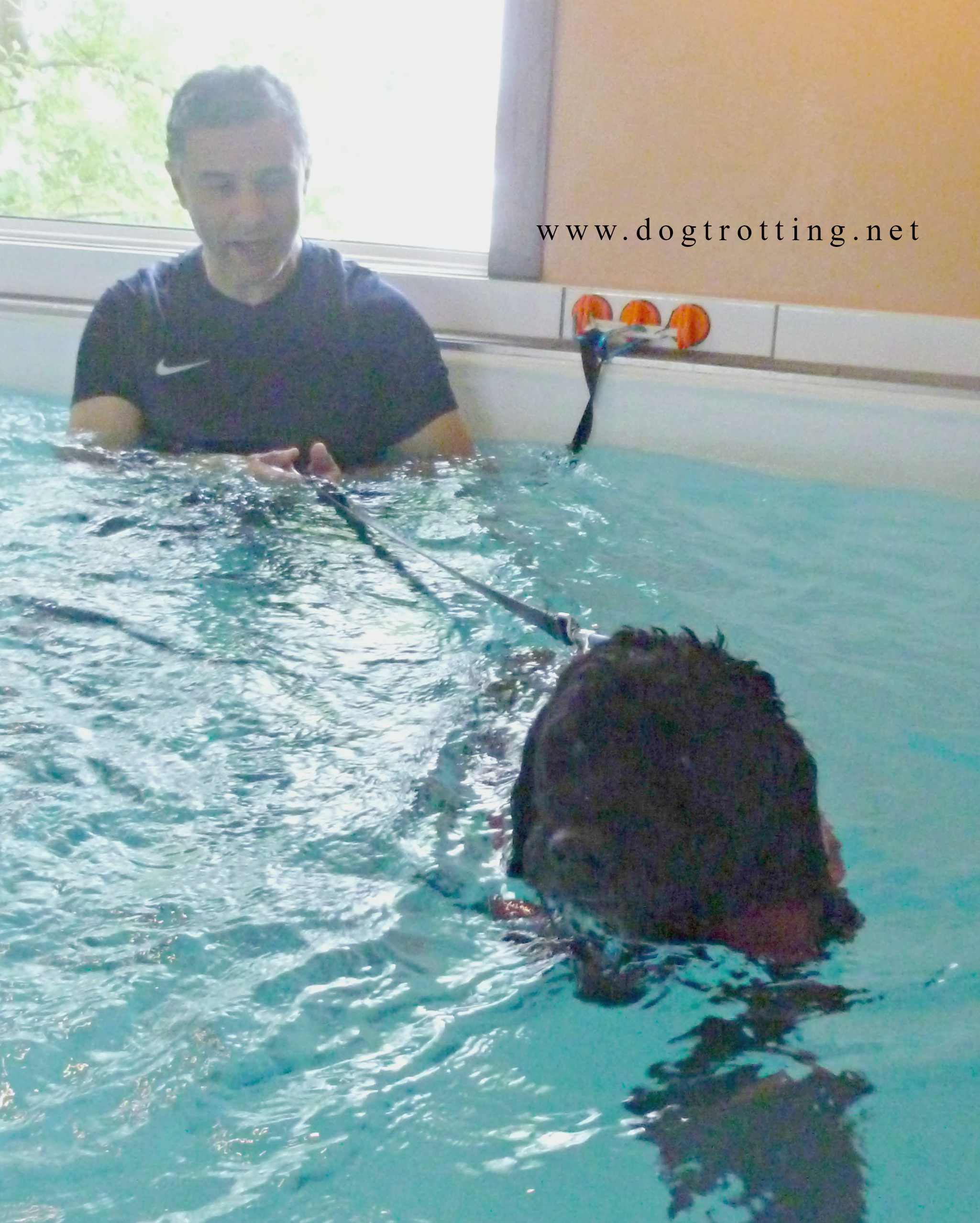 dog in physiotherapy pool