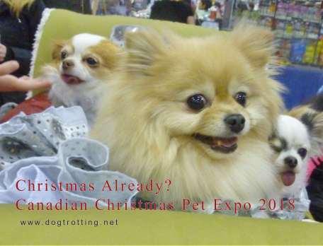 Canadian Christmas Pet Expo dogtrotting.net