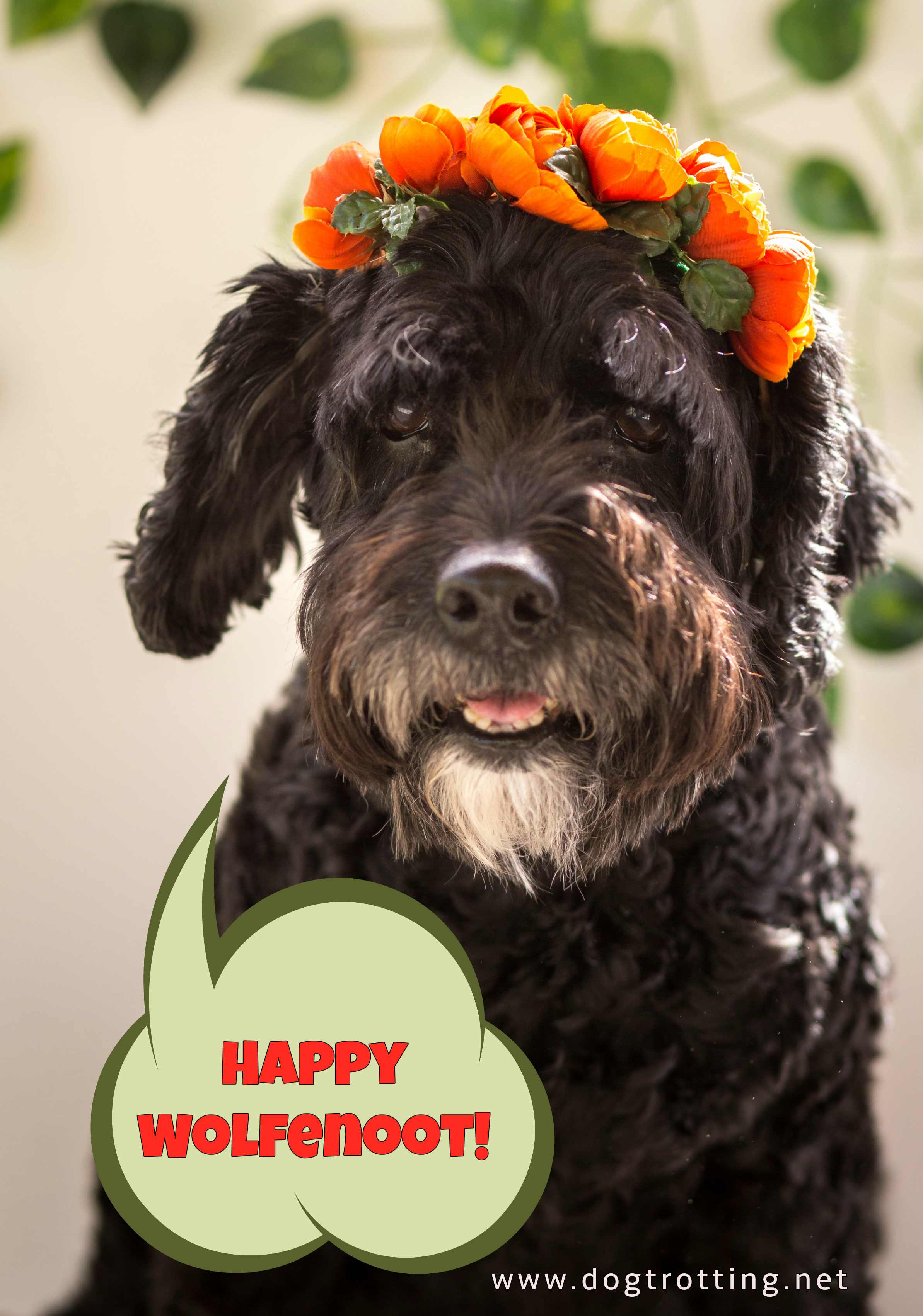 black dog with orange flowers