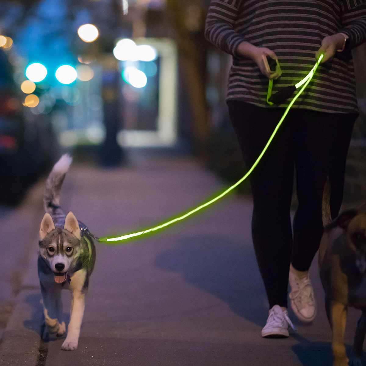 Dark Dog Walking and other problems …. Meet niteyleash
