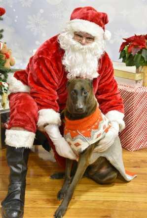 dog with santa www.dogtrotting.net