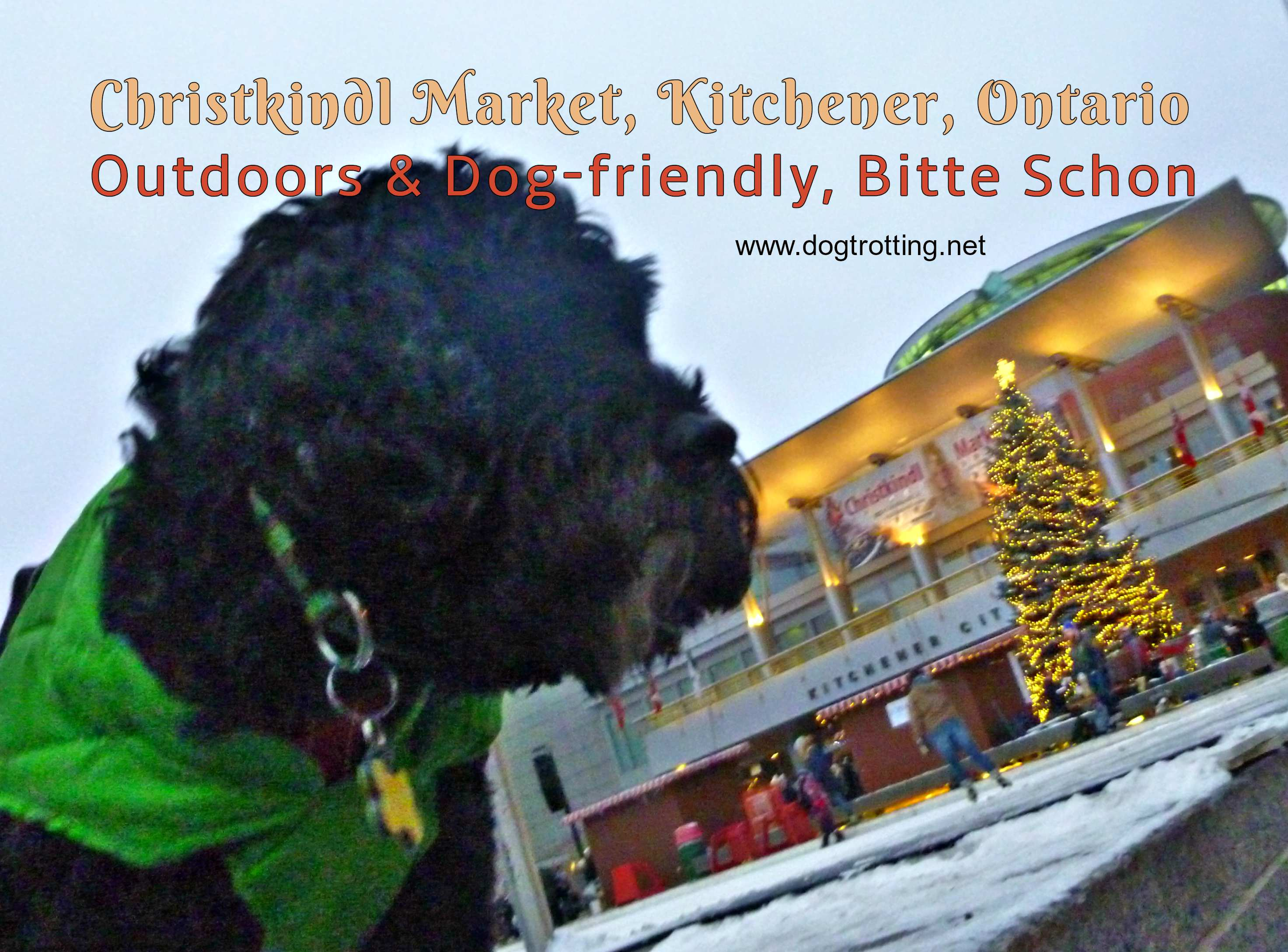 dog at Kitchener Christmas Market
