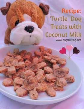 coconutturtledogtreats from dogtrotting.net
