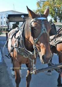 mackinac horse 7