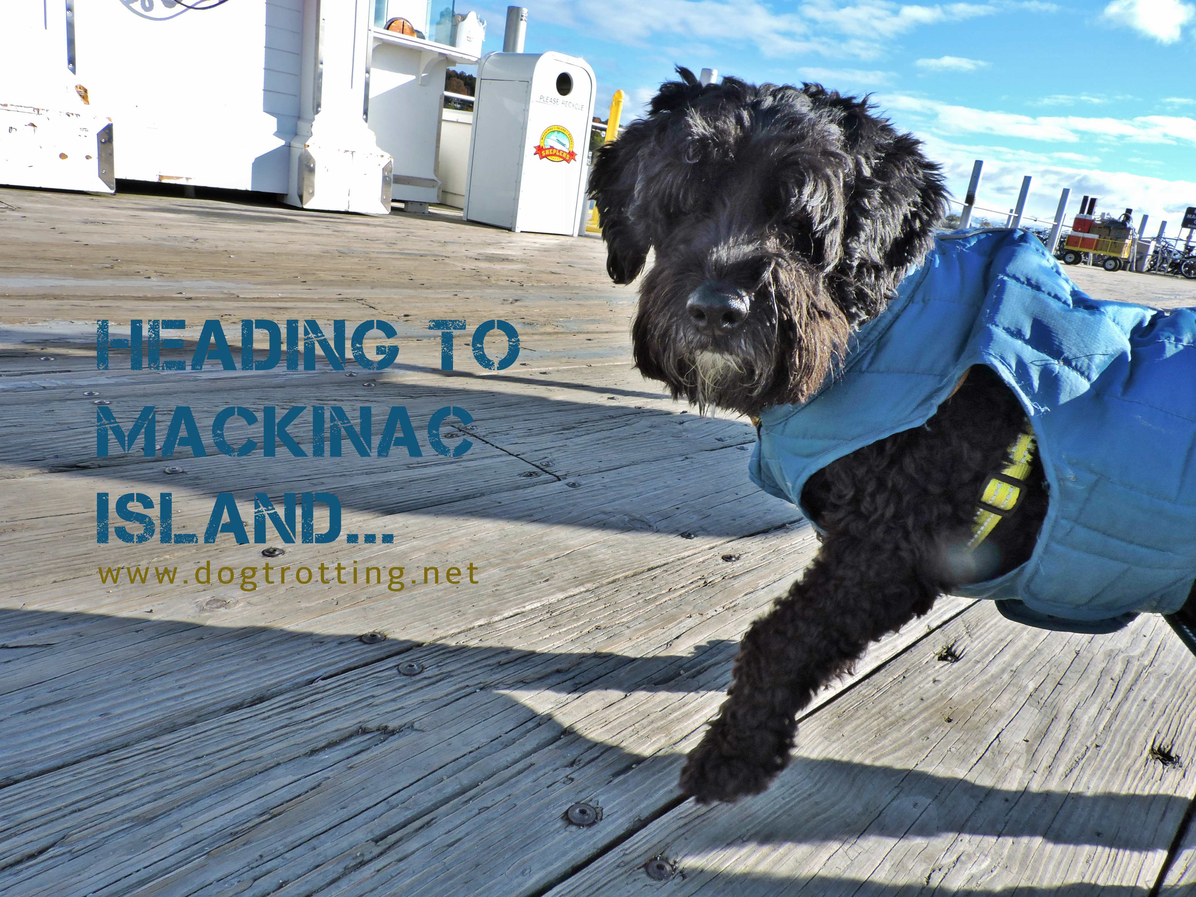 Part II: Mackinac Island, Michigan – Dog-friendly Horse-drawn Experience