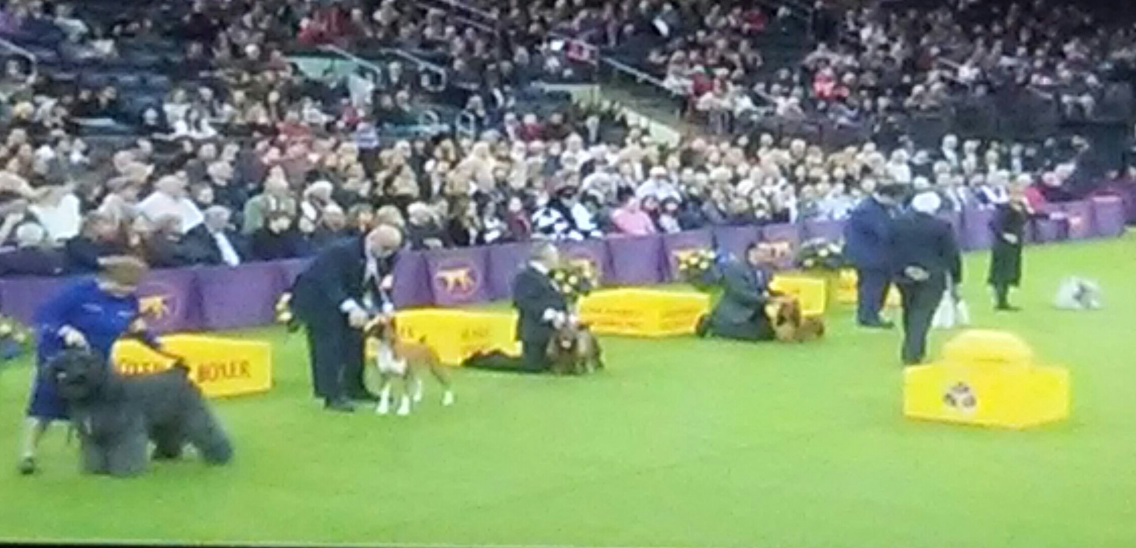judging Best of Show Westminster dog show