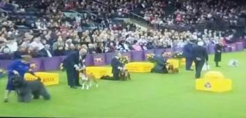 judging Best of Show Westminster dog show