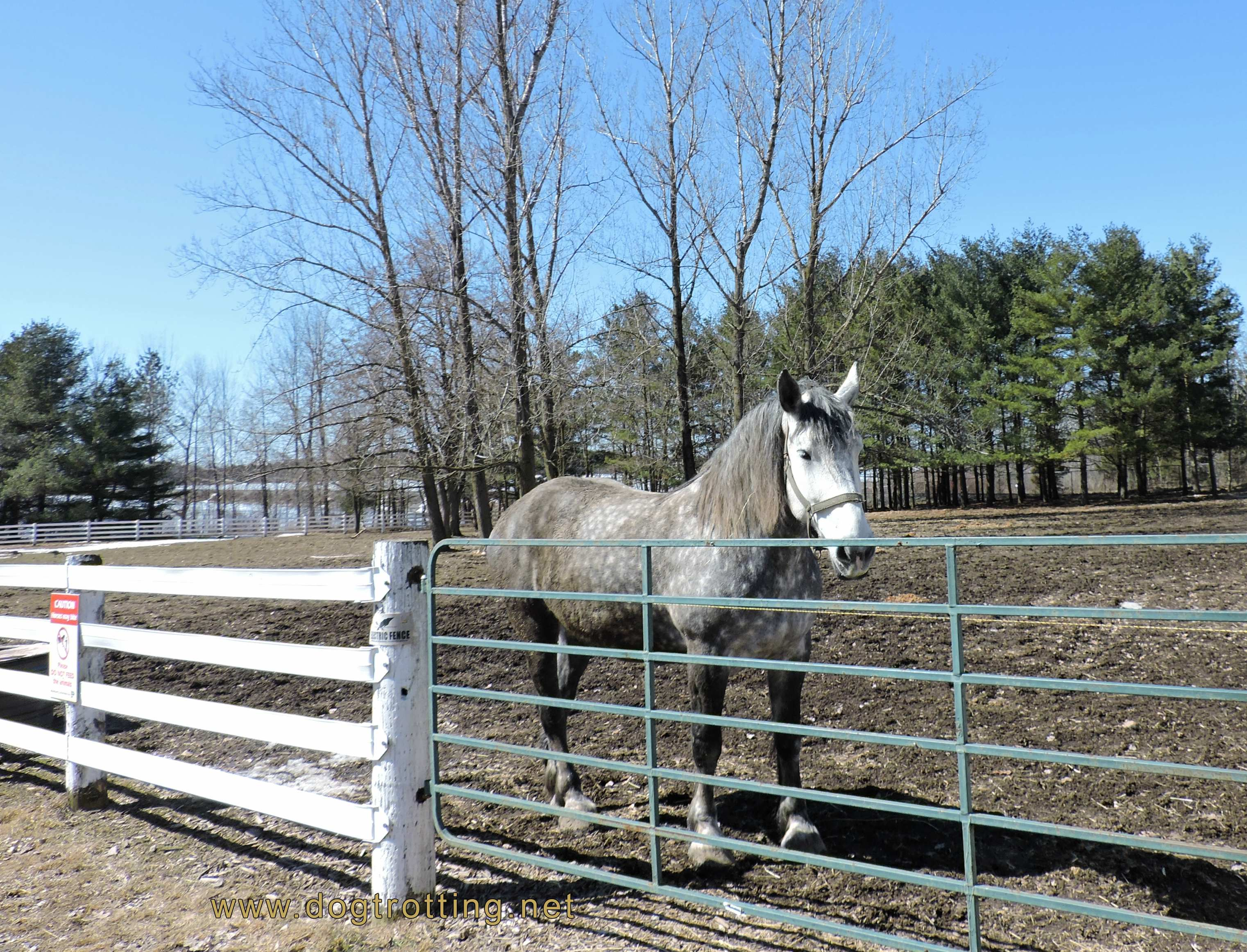Horse at Mountsberg Conservation Area, Campbellville Ontario