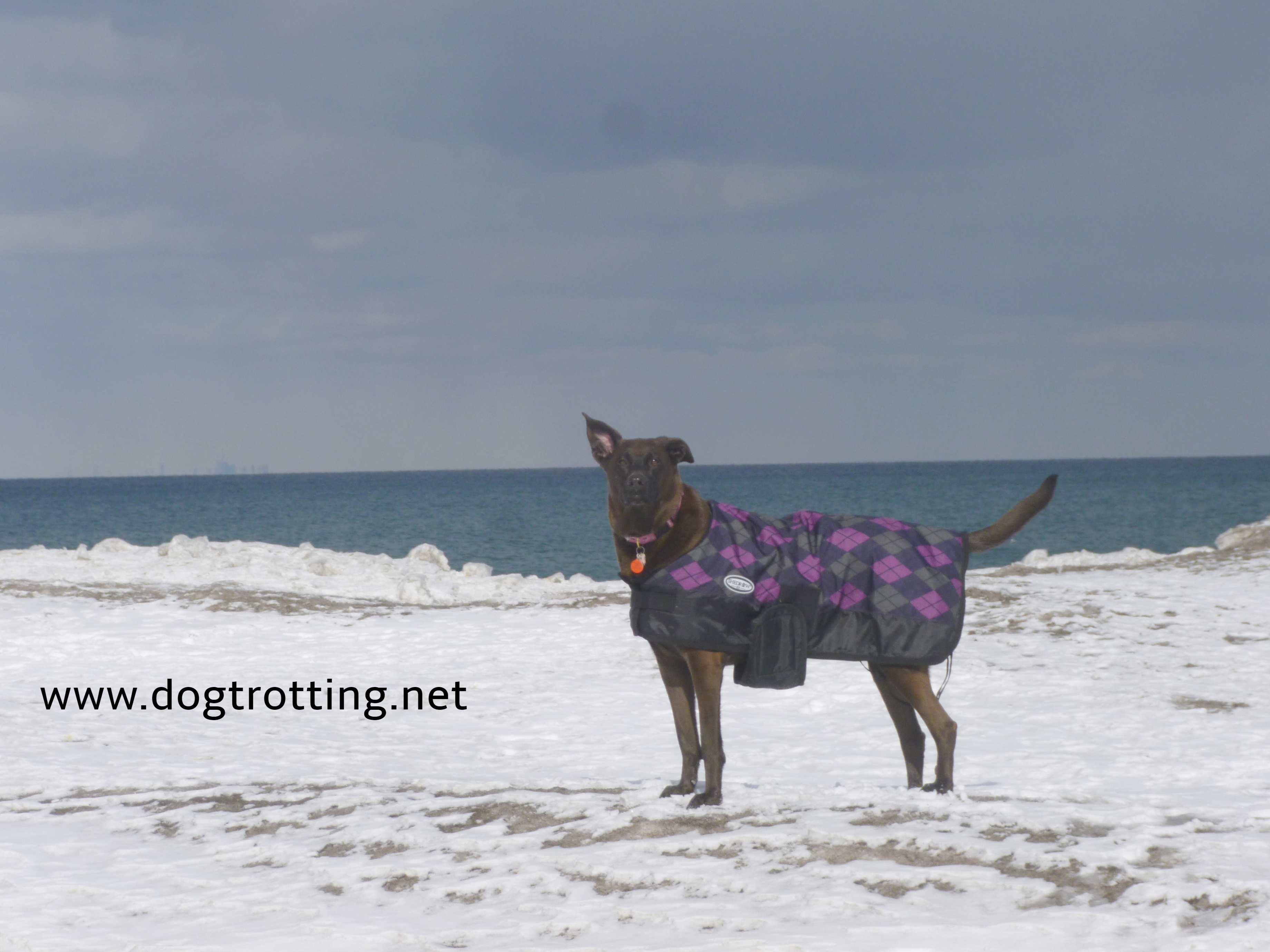 dog on the beach winter