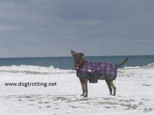 dog on the beach winter