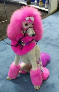 Creative Dog Grooming Contestant SuperZoo 2018