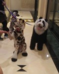 creative grooming dogs - one is a panda and the other a giraffe