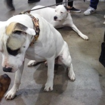 white dog meeting a brown dog at Canadian Pet Expo 2019