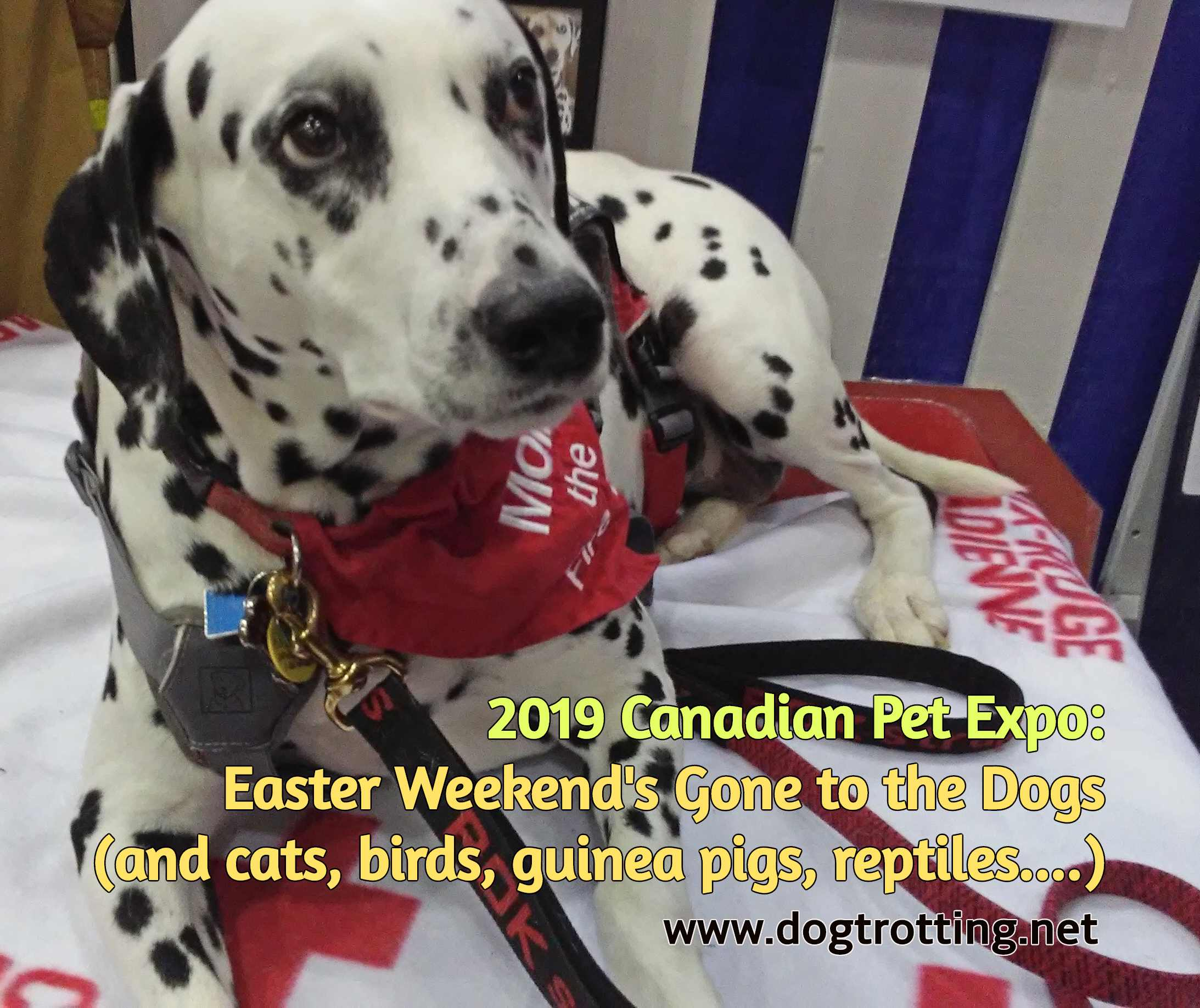 CONTEST #3: Canadian Pet Expo 2019 – Fun Finds and a Prize Pack too.