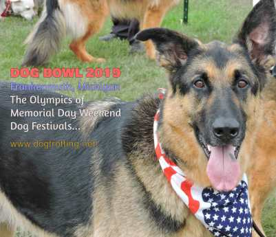 German Shepard at Dog Bowl 2019 Frankenmuth, Michigan
