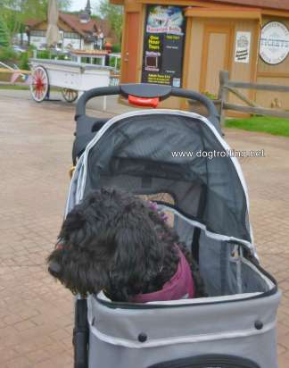 dog in stroller at Dog Bowl 2019 Frankenmuth, Michigan