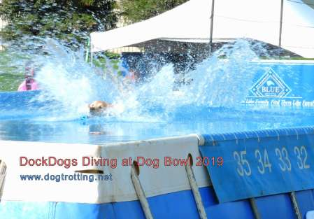 Dock Dogs Competition at Dog Bowl 2019 Frankenmuth, Michigan