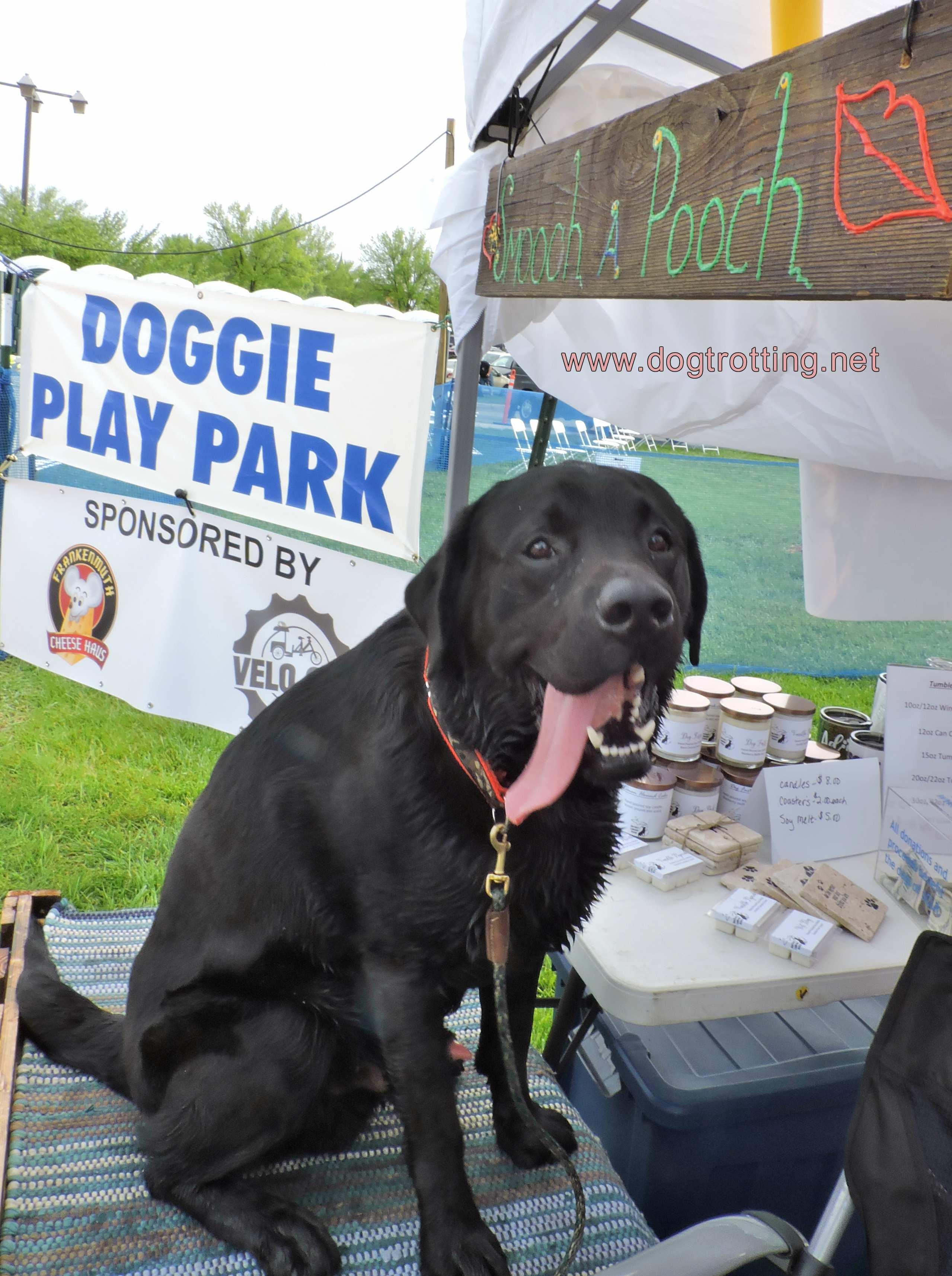 Dog at Smooch a Pooch booth Dog Bowl 2019, Frankenmuth, Michigan