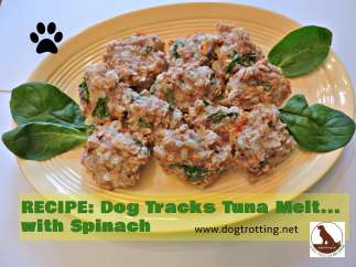dog treat recipe tuna melt dogtrotting.net