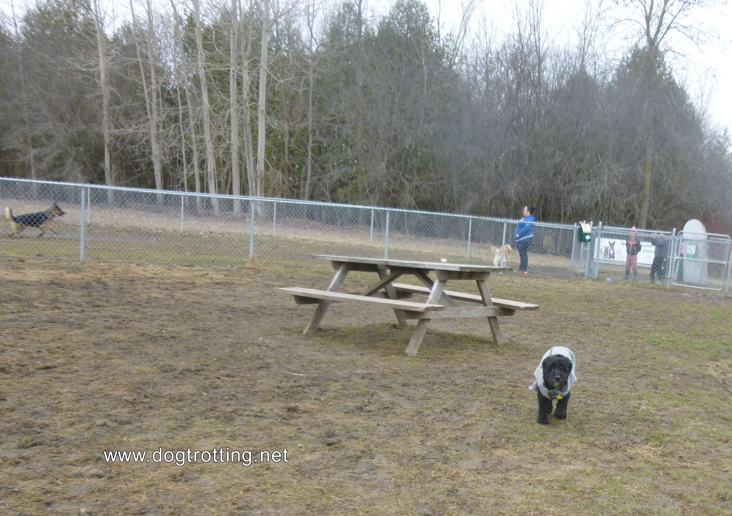Leash free dog park in Peterborough, Ontario