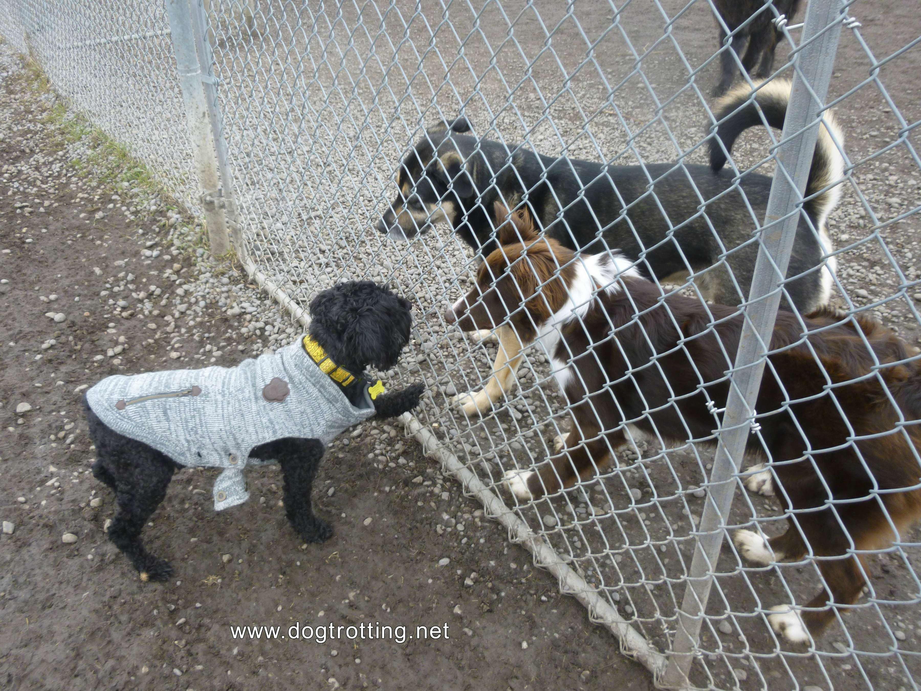 Three dogs at Peterborough leash-free dog park, Ontario