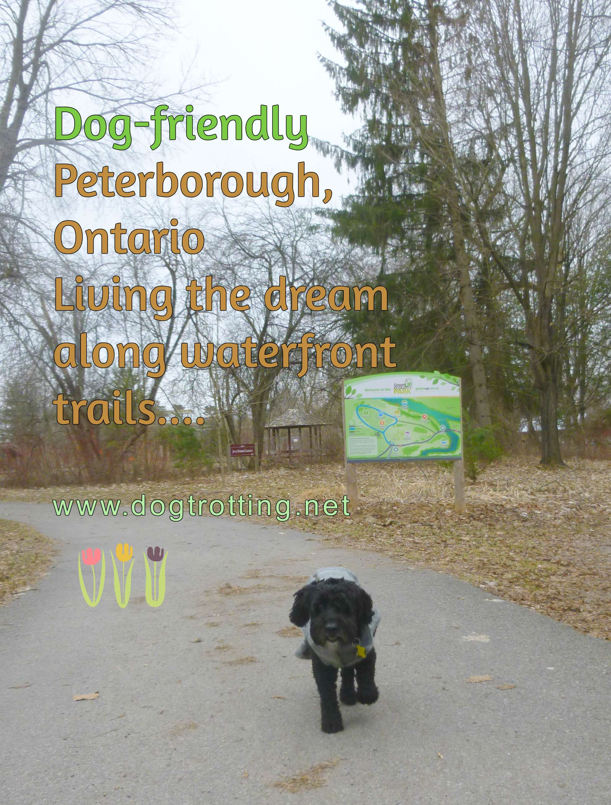 Happy Trails; Happy Tails – Dog Travels to Peterborough, Ontario