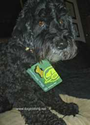 dog with Parks Canada pass