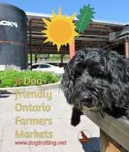dogfriendly farmers markets dogtrotting.net