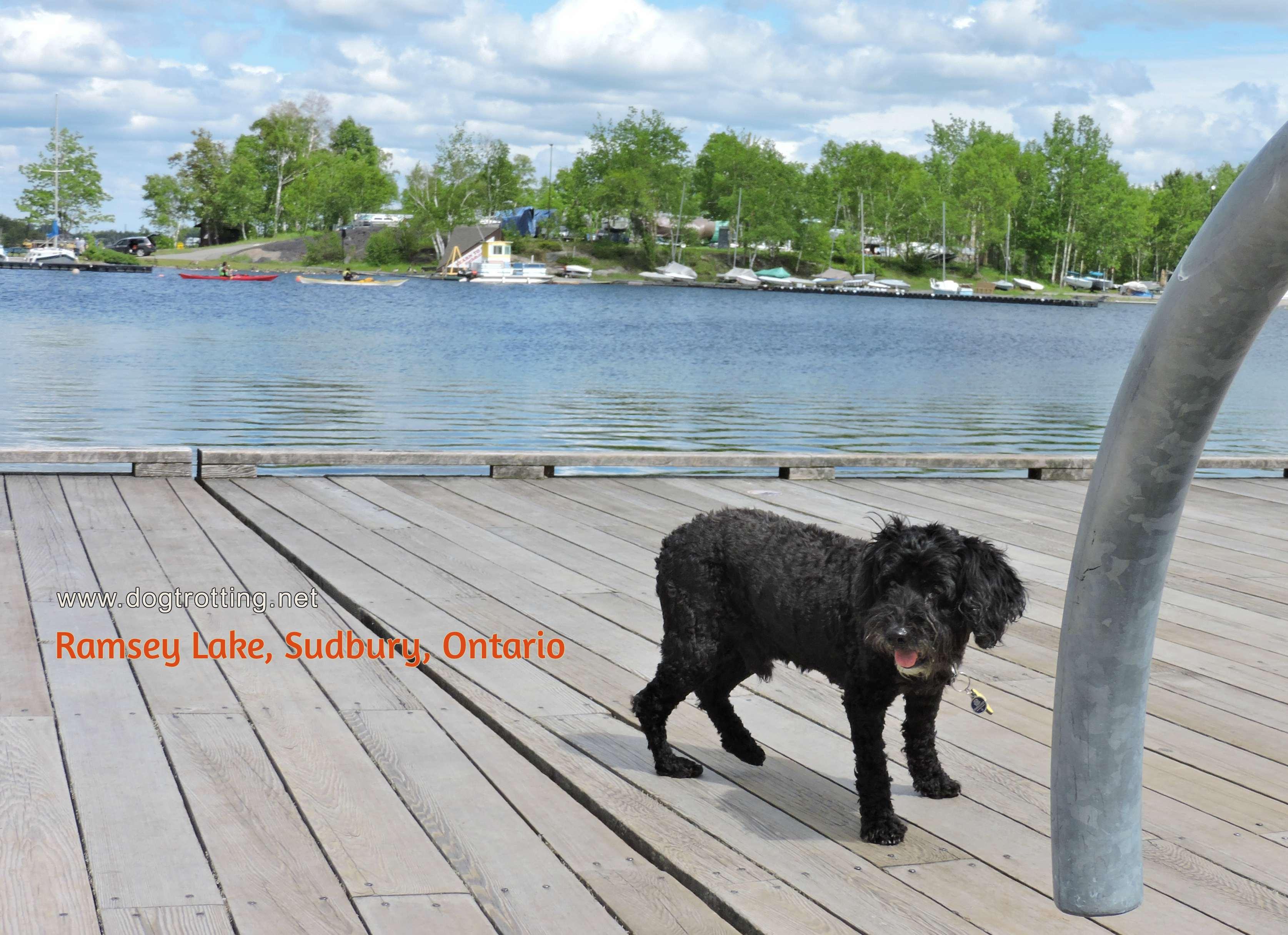 dog on dock at Ramsey Lake in Sudbury Ontario
