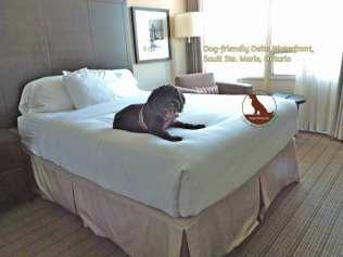 delta hotel sault ste marie dogtrotting.net