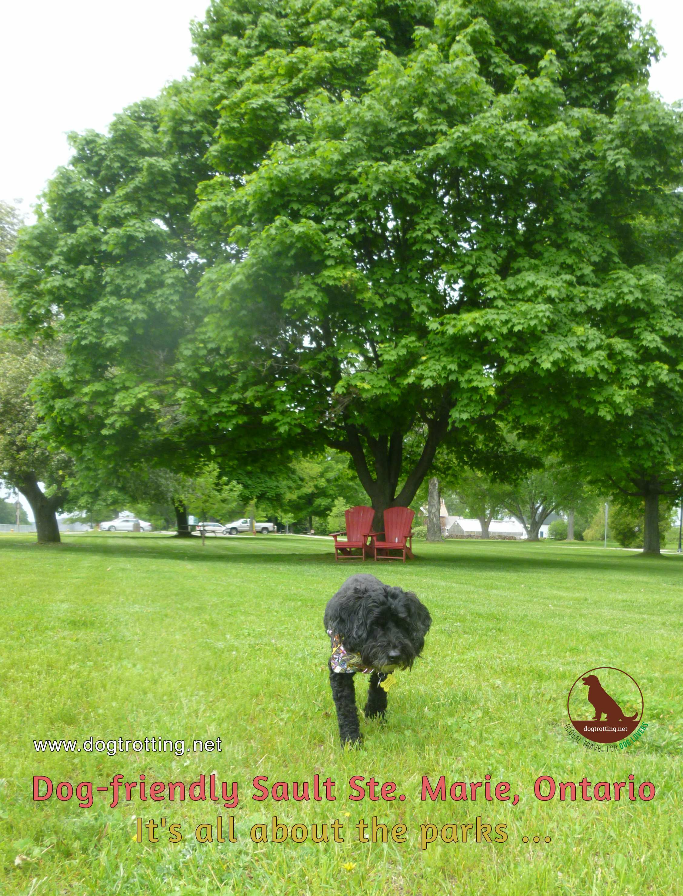 What to do in the Soo … with a dog. 6 Pet-friendly Outings in Sault St Marie, Ontario