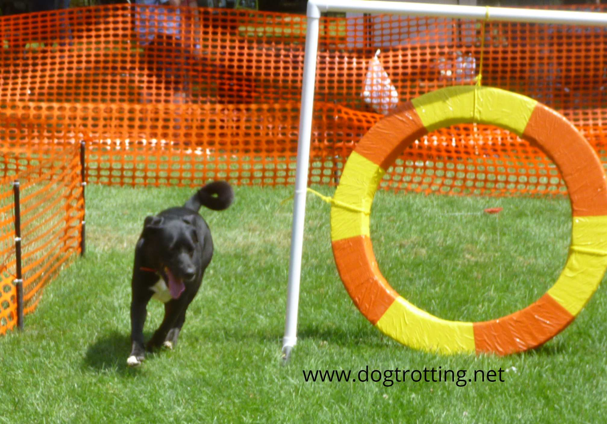 lure course dog at Pawsitivily Elgin 2019