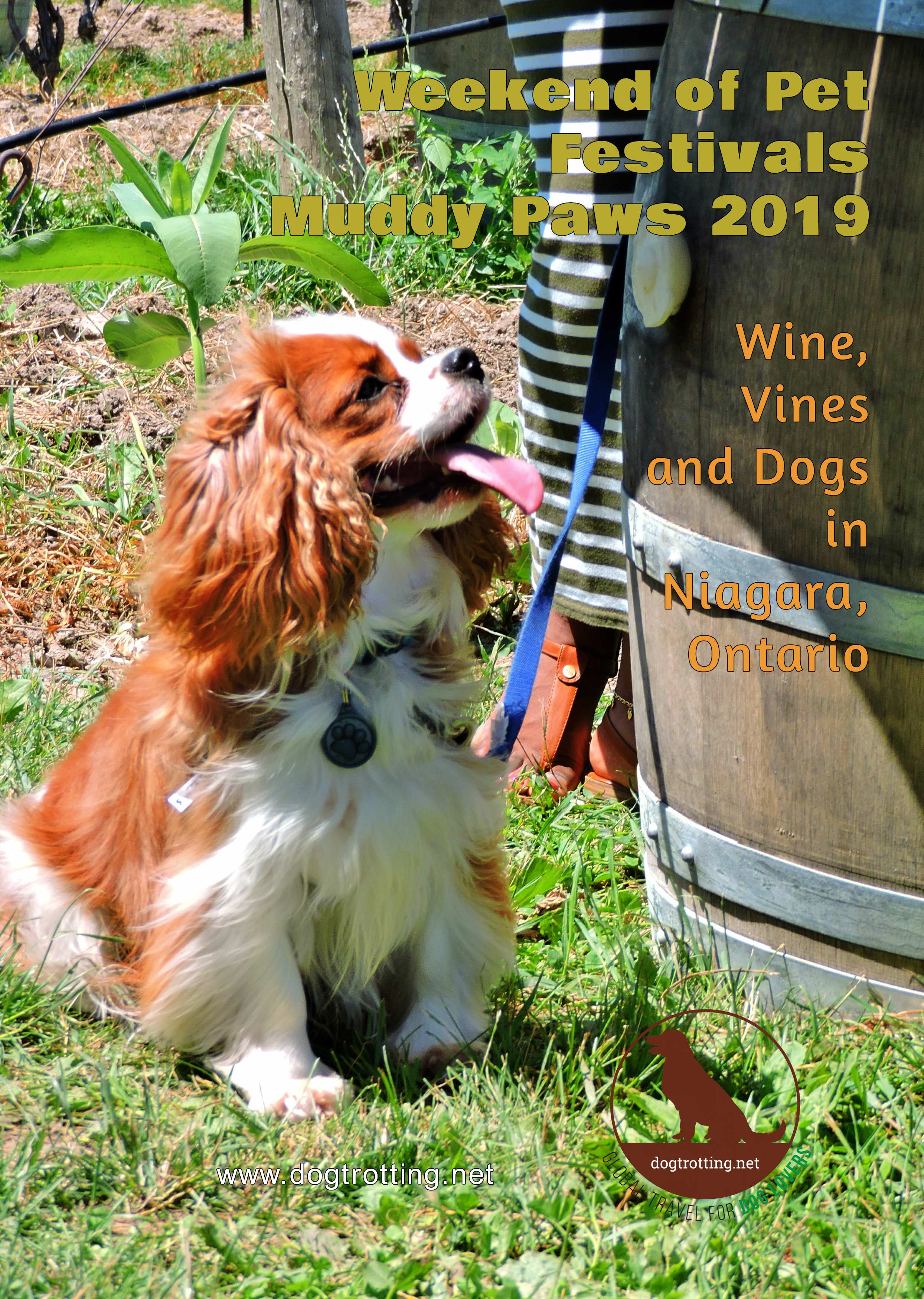 Dogs, Cats, Wine and Festivals – Purrfect Weekend Combination