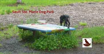 dog in dogpark in Sault Ste. Marie, Ontario