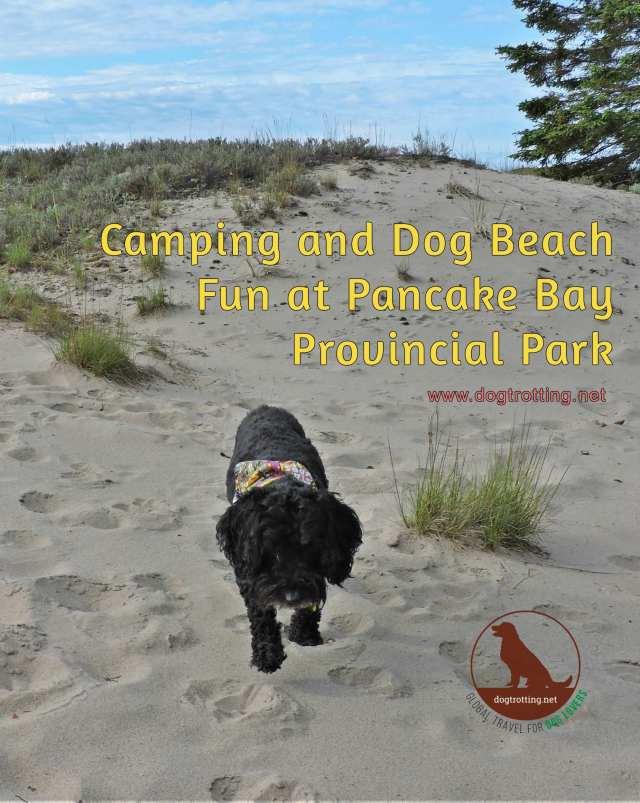 dog on dog beach pancake bay ontario canada