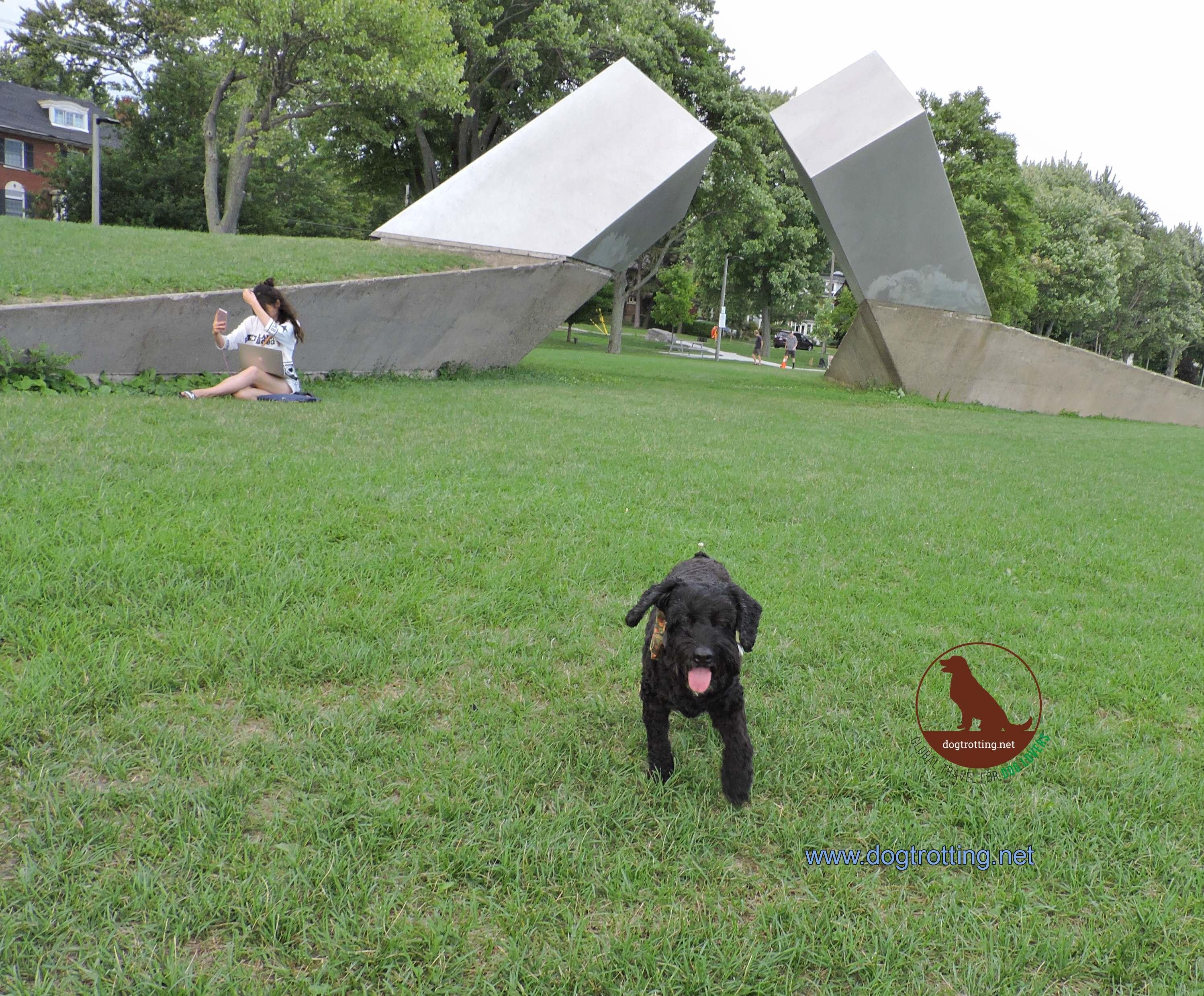 dog at Breakers Park in Kingston Ontario
