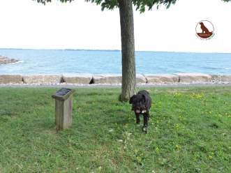 dog along lakeshore in Kingston Ontario
