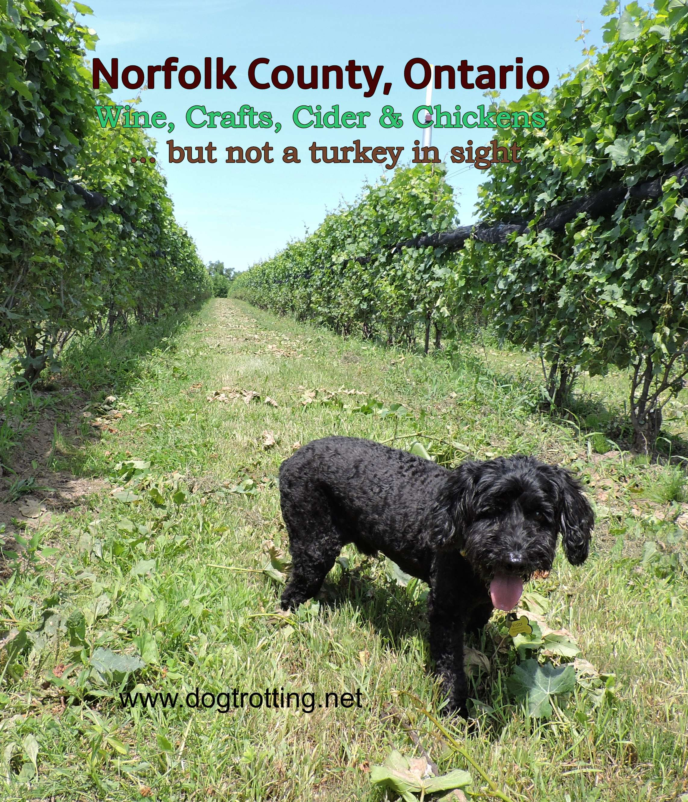 Toast the Coast: Norfolk County Long Weekend Dog-friendly Road Trip