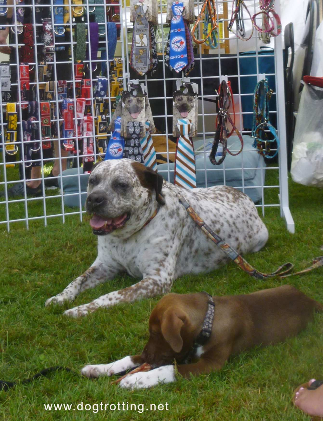 Pawlooza 2019 two dogs in front of merchandise