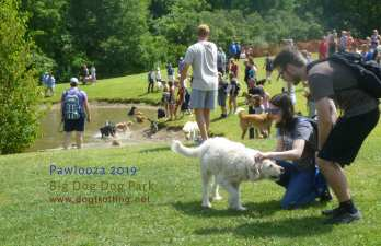 crowd of dogs and people around pond at Pawlooza 2019